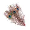 Wapsi Peacock Eye Feathers Orange