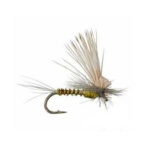 Tilt Wing Dun BWO 3734