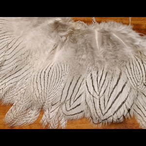 Silver Pheasant Feathers 1470