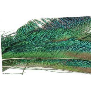 Peacock Swords 1666