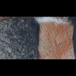 Dubbing Furs/ Australian Opossum, Muskrat Belly & Beaver 1667