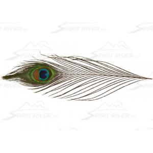 Spirit River UV2 Peacock Eyes 2848