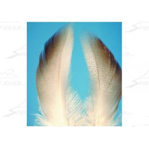 Spirit River UV2 Mallard Flank 2850
