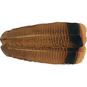 OzarkTurkey Tail  Feathers Cinnamon Tipped 719