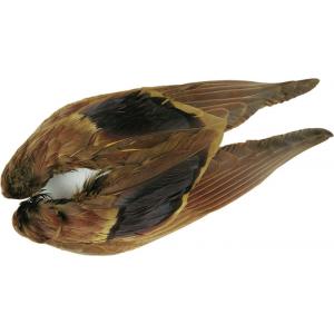 Mallard Wings 721