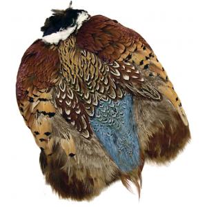 Ringneck Pheasant 790