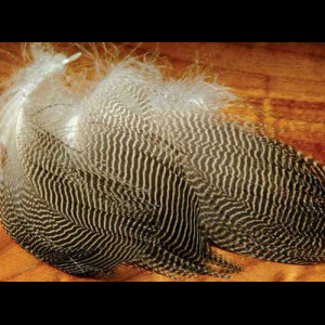 Gadwall Feathers 793