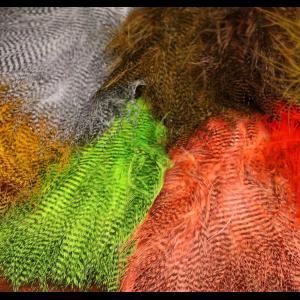 Fine Black Barred Marabou Feathers 4889